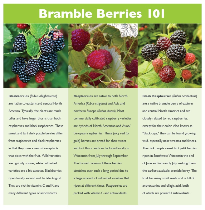 Bramble Berries 101