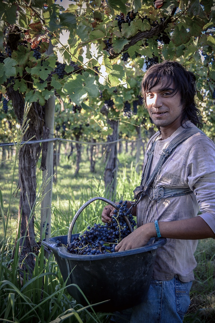La Riojana Cooperative-Cute Guy in Vineyard